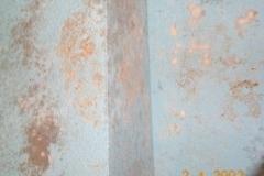 pino_20091208_1964354897
